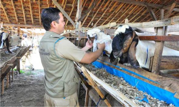 Asuransi Ternak Masih Disambut Dingin di Rembang