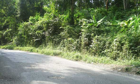 Blora Kalahkan Rembang Soal Bagi Hasil Kayu Hutan Mantingan