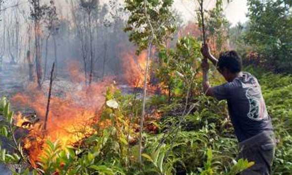 Perhutani Tingkatkan Sosialisasi dan Patroli Guna Cegah Kebakaran Hutan