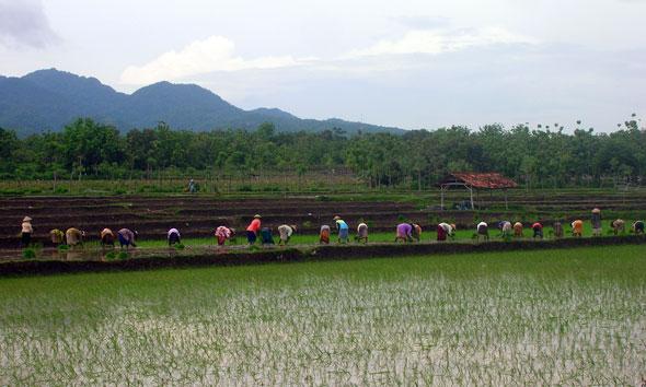 Jelang Tanam, Petani Rembang Disiapi 7.935 Ton Urea