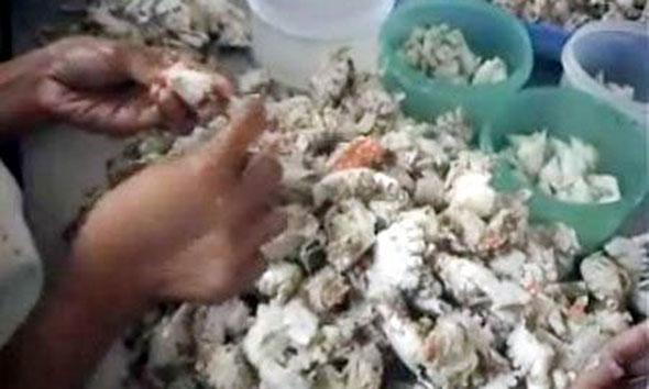 Nelayan Rembang Sulit Patuhi Aturan Susi Soal Rajungan