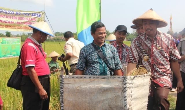 Plt Bupati Rembang Abdul Hafidz saat panen raya padi di Desa Ngadem Kecamatan Rembang, baru-baru ini. (Foto: mataairradio.com)