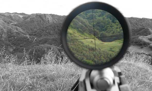 Petani Kewalahan Melawan Serangan Ratusan Babi Hutan
