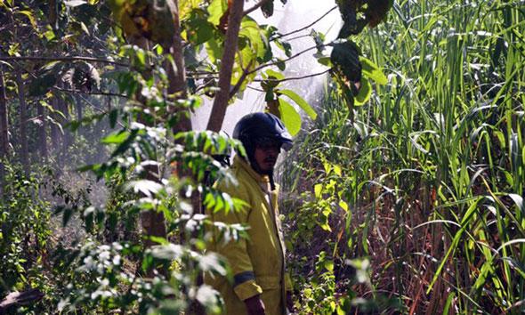 10 Hektare Kebun Tebu Siap Panen Terbakar