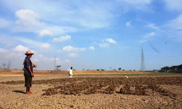 Petani Tanam Jagung di Embung Kering Rawasetro