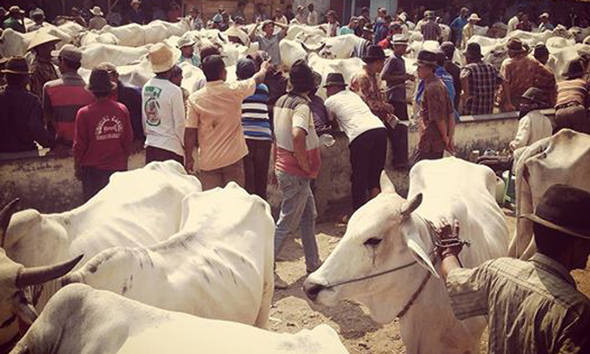 Suasana Pasar Hewan Kragan. (Foto: Arif Bahtiar)