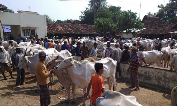 Peternak Sapi Rembang Cemaskan Dampak Impor Daging