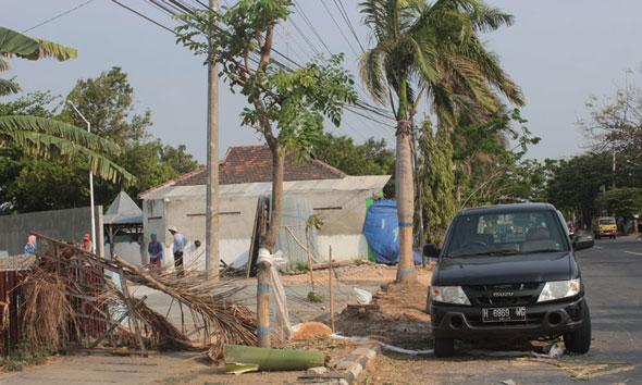 Pohon palem yang ditebang untuk kepentingan SPBU di kawasan Jalan Pemuda Rembang. (Foto: Pujianto)