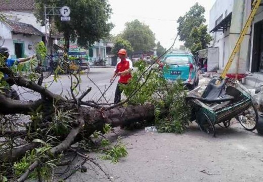 Pohon Tumbang Timpa Tukang Becak di Lasem