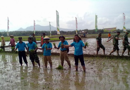 Petani Rembang Diingatkan Pakai Bibit Bersertifikat