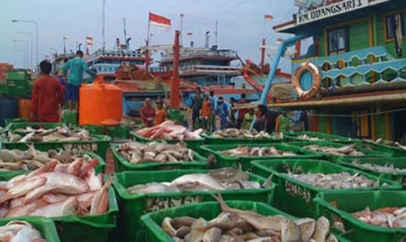 Kapal cantrang yang membongkar hasil tangkapan ikannya di Pelabuhan Pendaratan Ikan Tasikagung Rembang, belum lama ini. (Foto: Pujianto)
