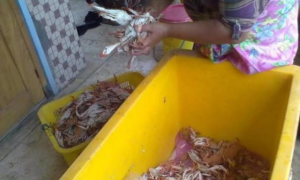 Hasil tangkapan rajungan oleh nelayan di wilayah Kabupaten Rembang sedang melimpah. Namun hal itu tidak diimbangi dengan harganya yang baik. (Foto: Mukhammad Fadlil)