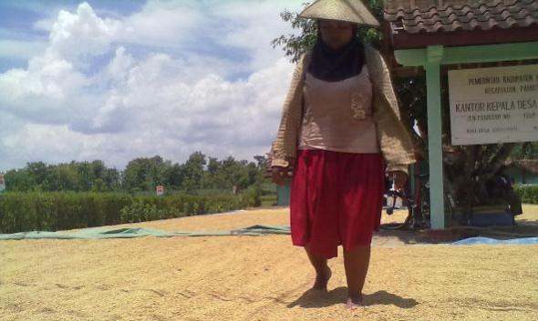 Harga Gabah Petani Rembang Merosot di Bawah HPP