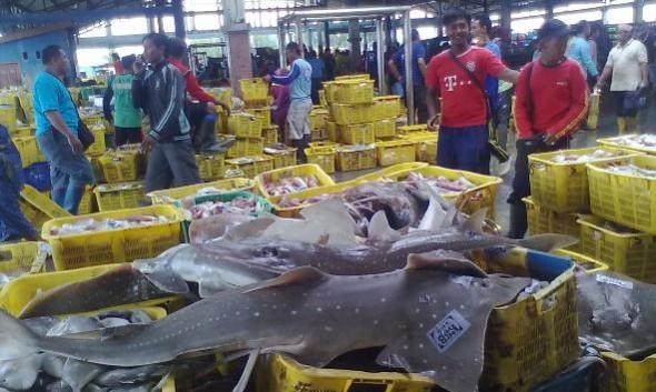 Cantrang Dilarang, Produksi Ikan di Rembang Turun