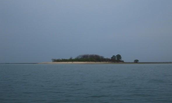 Pantai Pasir Putih Tasikharjo Diperkuat 7.000 Cemara