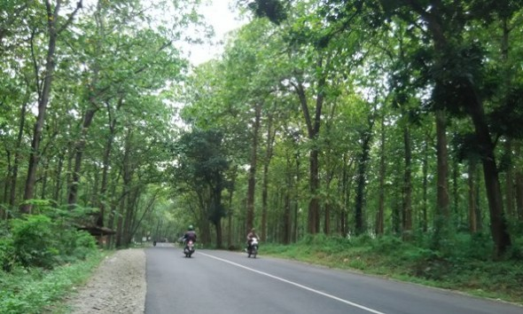 Modus Baru Pencurian Kayu Hutan Bergerombol 60 Orang
