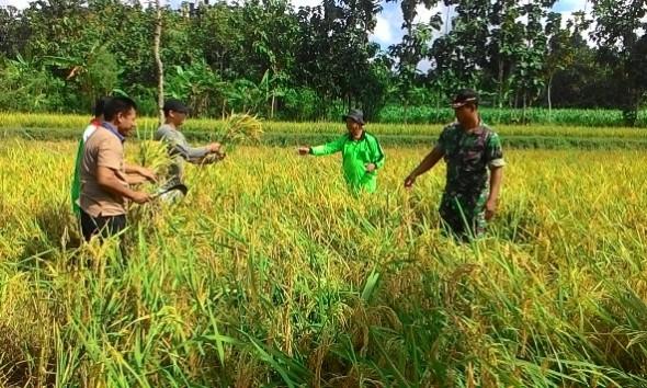 Kelompok Petani Sale Bersaing Jadi Terbaik Nasional