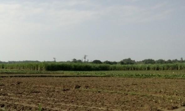 Produksi Tembakau Rembang Bisa Anjlok Akibat Kemarau Basah