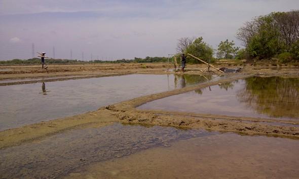 2016, Produksi Garam Rakyat Rembang Merosot Tajam