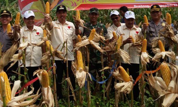 Petani Jagung Perlu Bantuan Jajaki Pengusaha Makanan Ternak