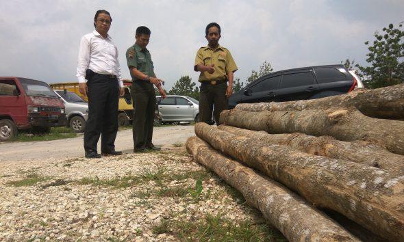 Curi Kayu di Hutan Negara, Ngadiyono Diringkus