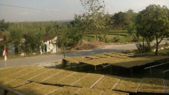 Rembang Minta Tambahan 1.300 Hektare Lahan Tembakau