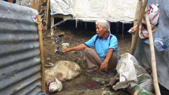 Tujuh Ekor Kambing Mati Diserang Anjing Piaraan