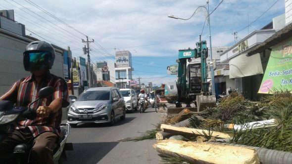 Berdalih Adipura, Palem Sepanjang Jalan Kartini Ditebang