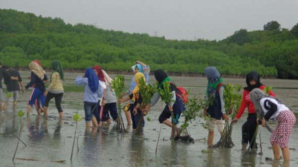 Cegah Abrasi, Puluhan Mahasiswa Tanam 3.000 Pohon Bakau