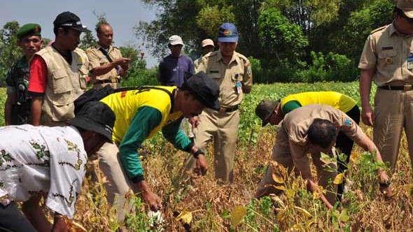 Tergantung Impor, Petani Diajak Gencar Tanam Kedelai