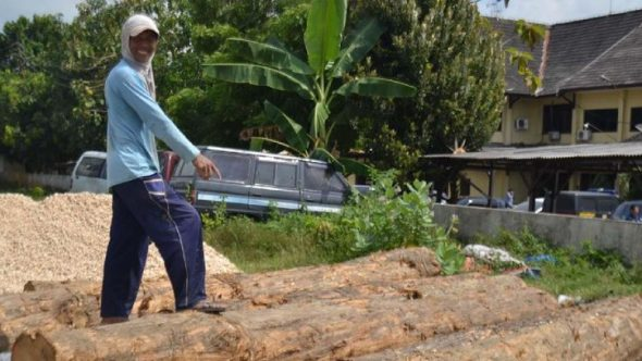 Tren Pencurian Kayu di Hutan Negara Menurun