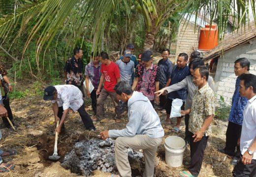 30 Persen Kebun Kelapa di Rembang Diserang Hama