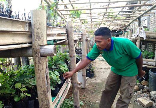Petani Asal Japerejo Kembangkan 90 Jenis Anggur Impor