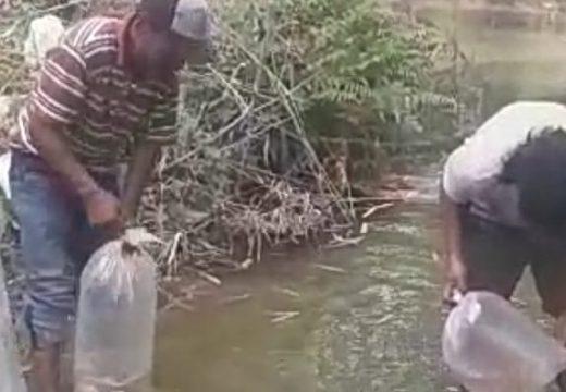 Ribuan Benih Ikan Disebar Warga Untuk Kelestarian Sungai