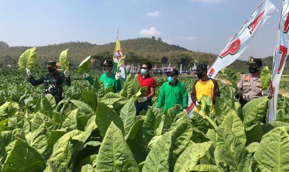 Petani Tembakau Rembang Butuh Bantuan Alsintan dan Pupuk
