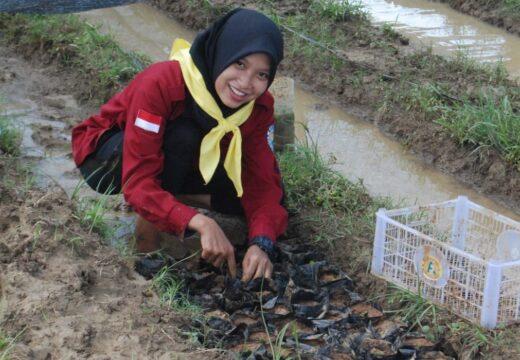 Mahasiswa di Rembang Semai Ribuan Mangrove Jenis Avicennia dan Rhizophora