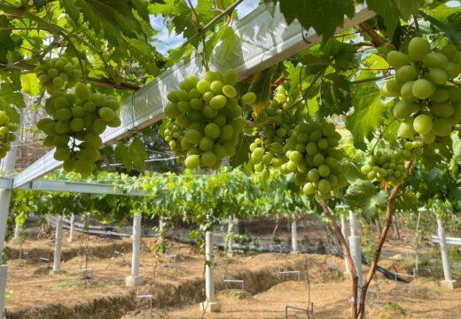Bikin Agrowisata, di Gunem Ada Kampung Pengangguran
