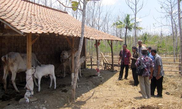 Kalitengah Bikin Kampung Ternak Sistem Kaveling