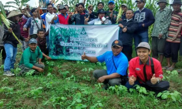 Rembang Awali Gerakan Ansor Bertani